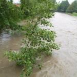 Kleinere Bäume hielten den Wassermengen nicht stand.