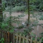 Auch die Bäume standen tief im Wasser der Vechte.